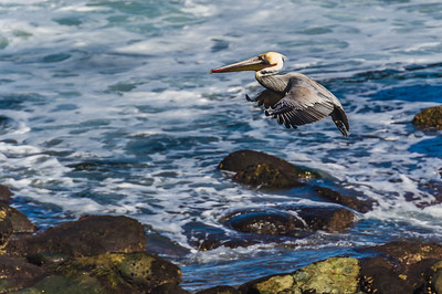 Brown Pelican Landing Approach