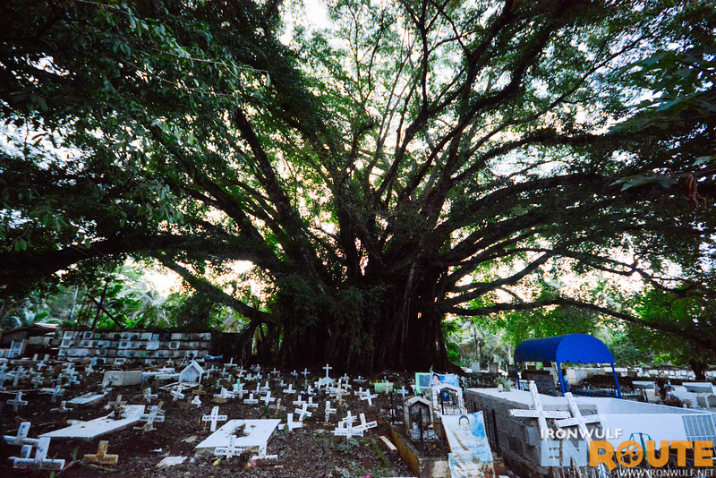 The huge 155-years old balete tree at the center of the Old Cemetery