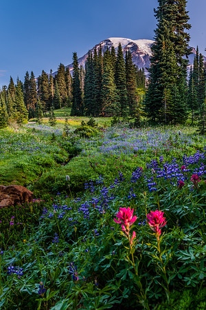 Wildflowers at Mt Rainier