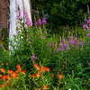 Fireweed and Indian Paint Brush