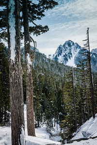 Tatoosh Range Through the Trees