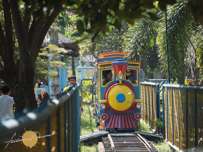 Mini-train ride at the park