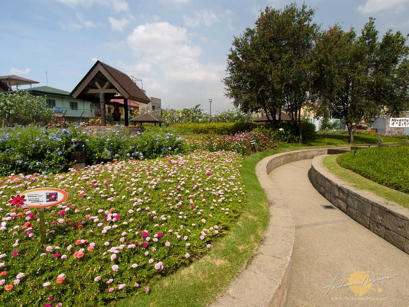 Wonderful flower field garden