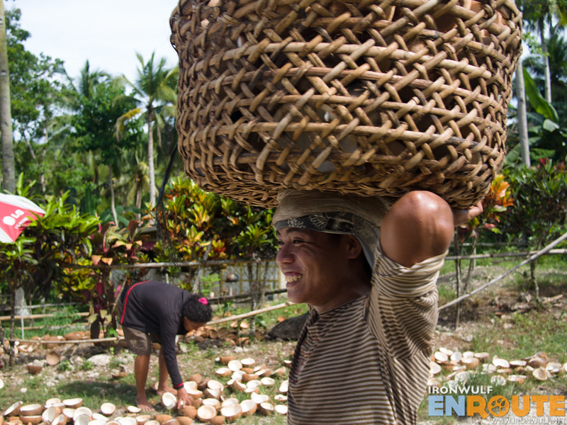 Carrying basket loads of coconuts