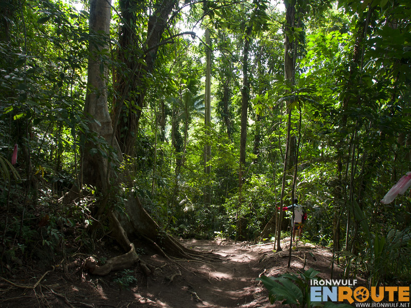 Lots of Balete trees on  the trail to the falls