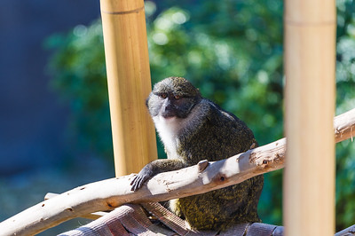 Monkey in His Tree House
