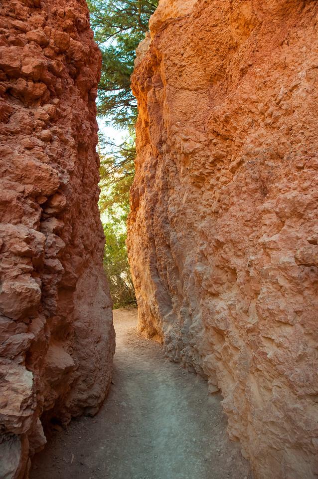 Narrow path in Bryce Canyon
