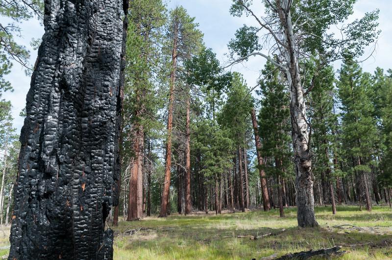 Recent wildfires