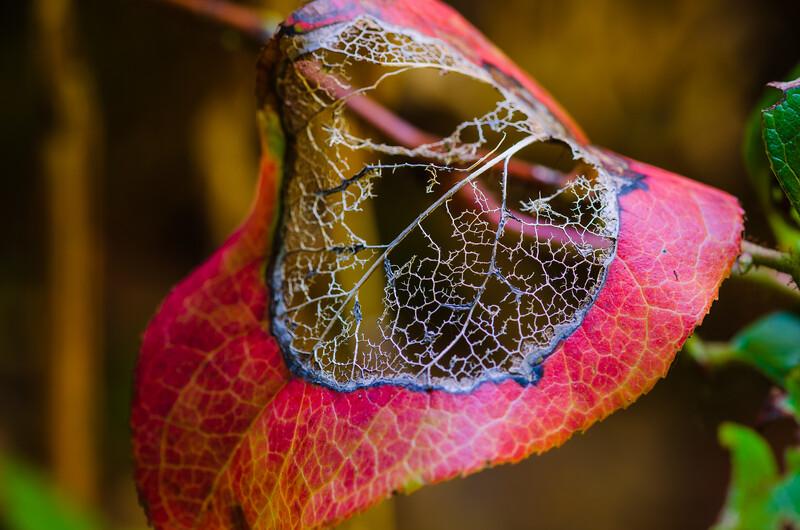 Decayed Leaf