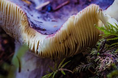 Mushroom up Close