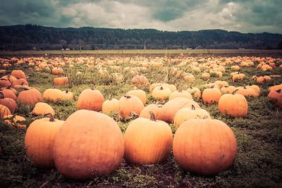 Chapman Pumpkin Farm