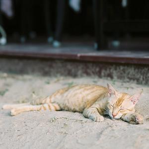 Thailand_020 P160
