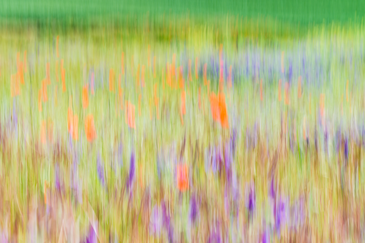 Blurred Wildflowers