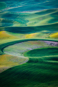 Wheat Fields on the Palouse