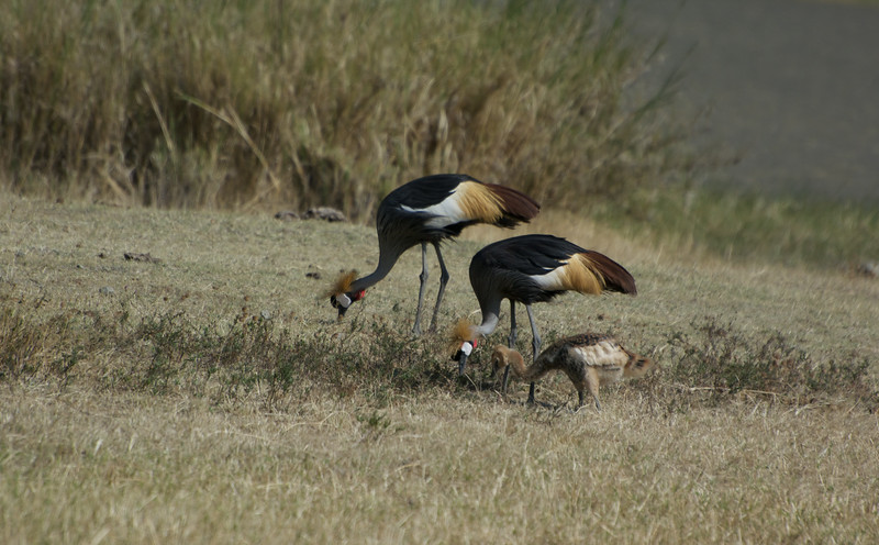 Crown Crane family finds time to dine together.