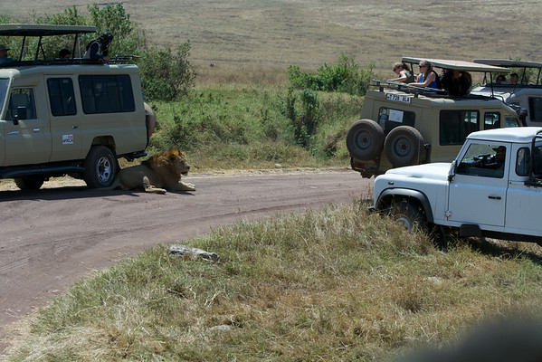 Park security comes to encourage the lion not to keep hostages...