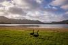 2014-08 New Zealand 1286