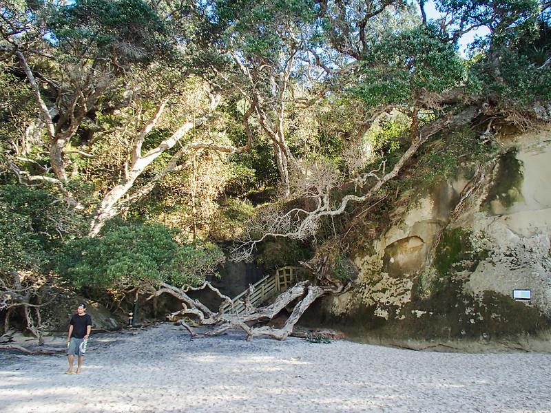 2014-08 New Zealand 0563