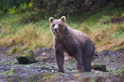 2014-09 National Geographic Alaska on Lindblad