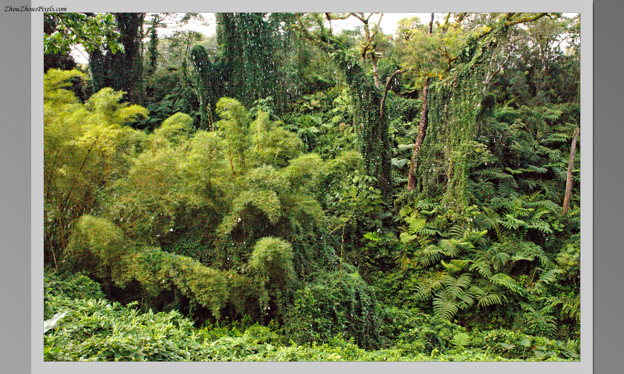 2014_10_15-4 Slideshow (Hawaii)-564