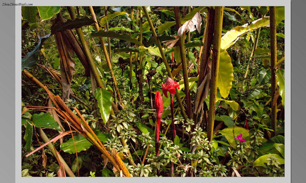 2014_10_15-4 Slideshow (Hawaii)-571