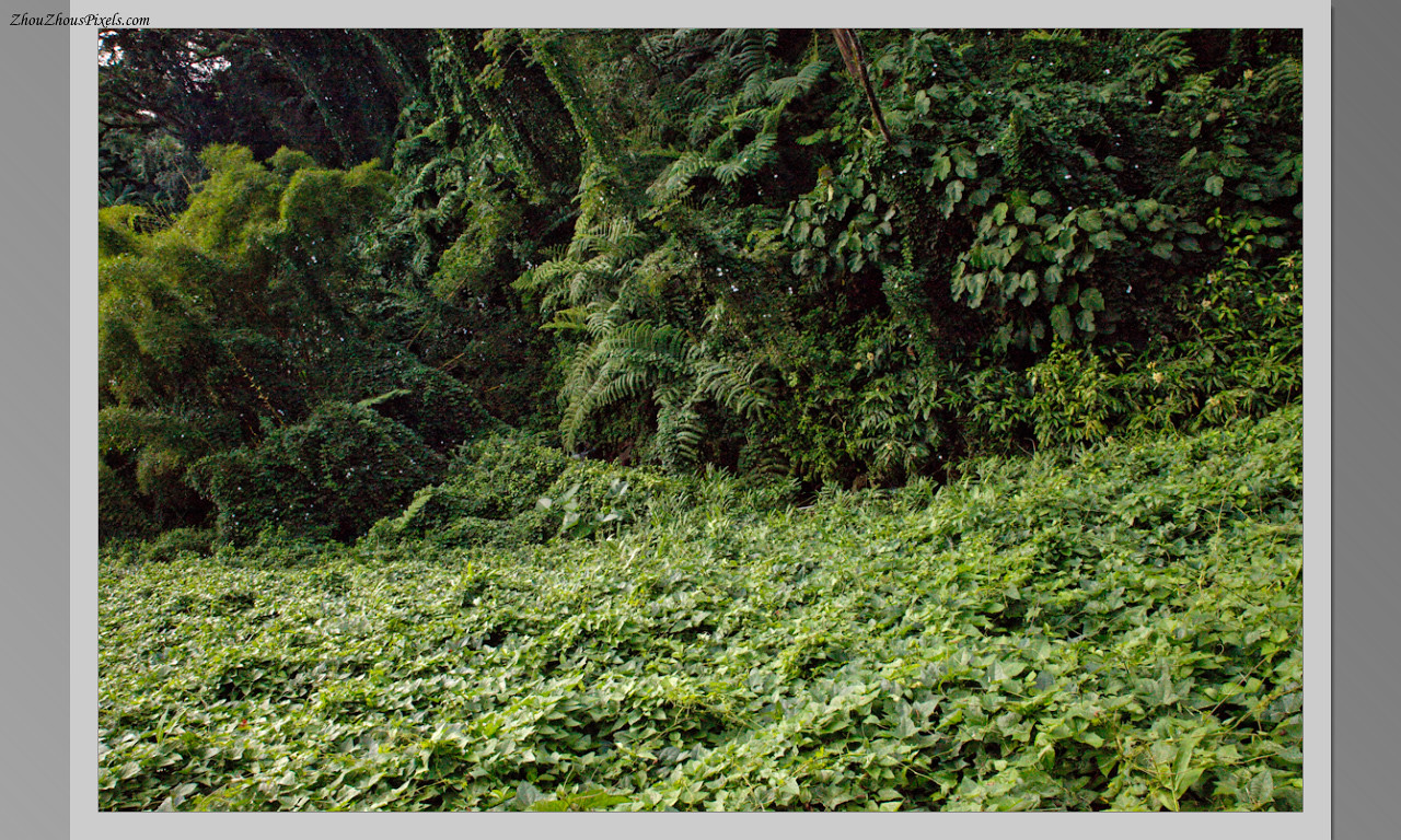 2014_10_15-4 Slideshow (Hawaii)-565