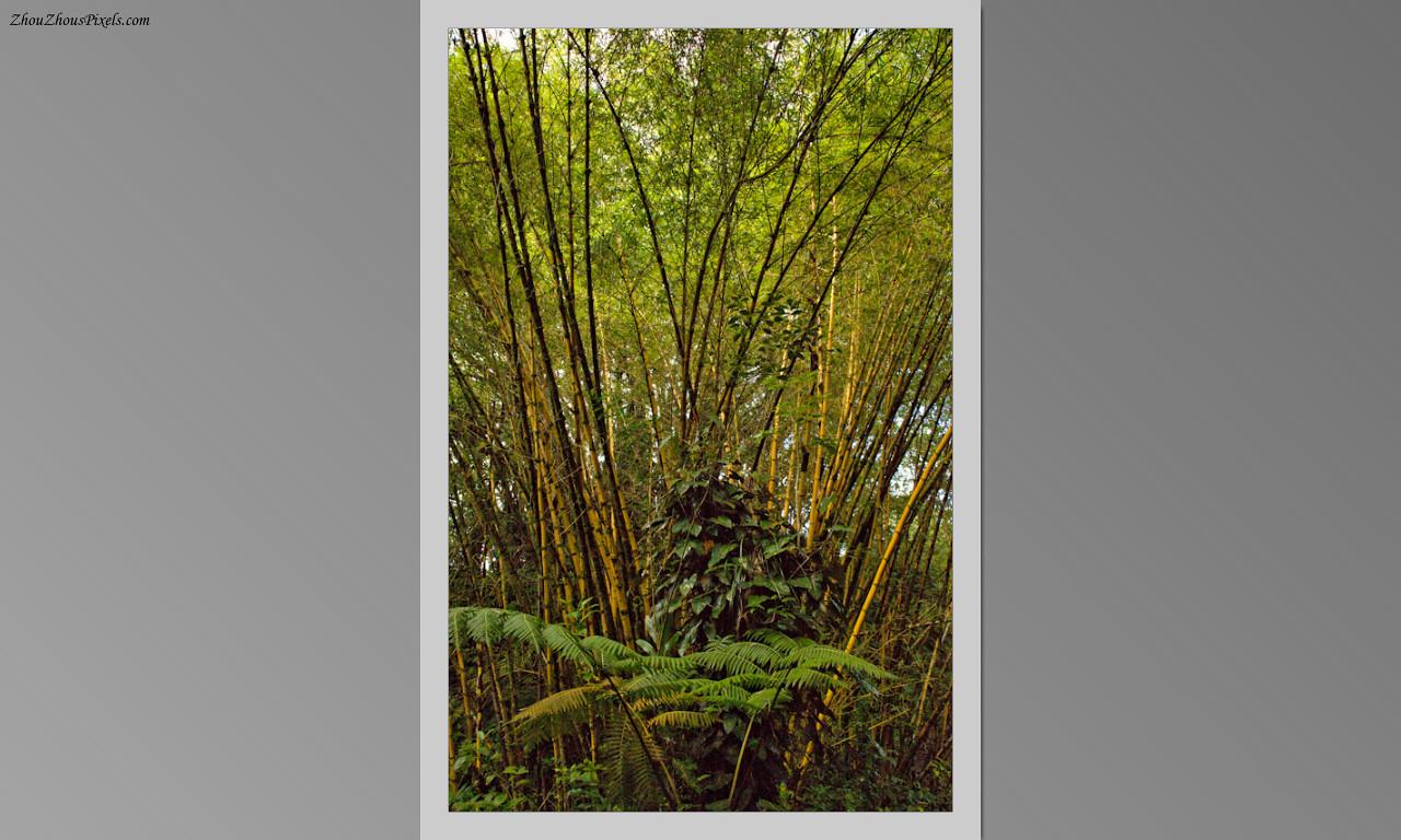 2014_10_15-4 Slideshow (Hawaii)-566