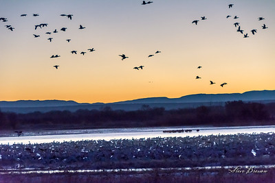 2015/01/05AM Bosque del Apache
