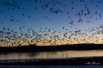 2015/01/06AM Bosque del Apache