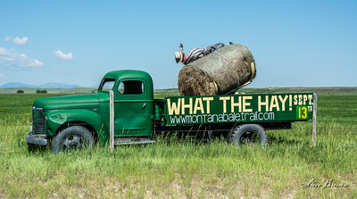What The Hay!