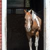 A Horse Named Fallon