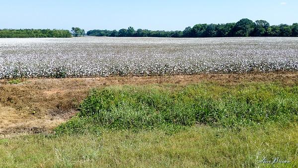 2016/09/24 Woodall Mtn MS + Alabama Cotton