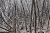 Hobbit Forest, Bournda National Park