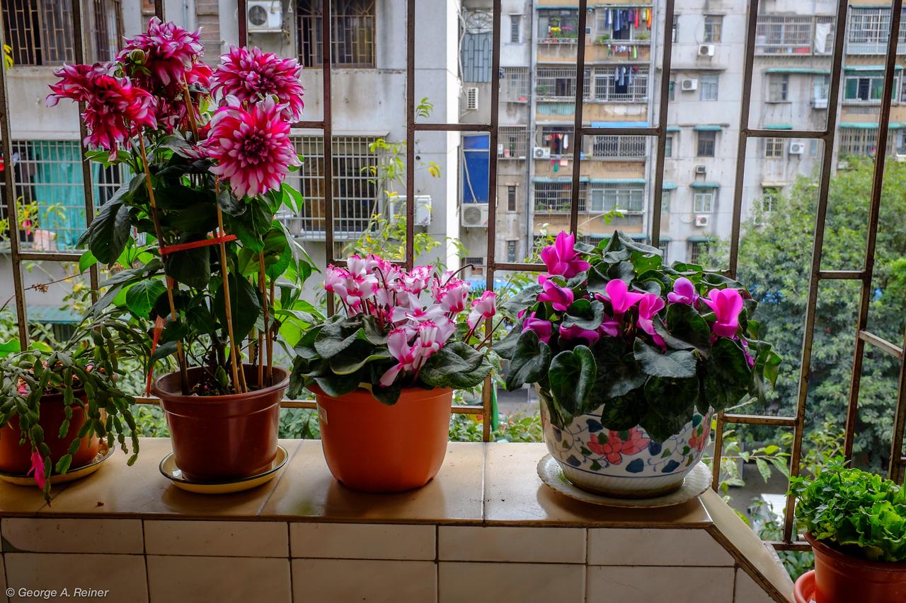 Flowers on their Godparent's balcony.