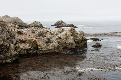2015 Cloudy Point Lobos