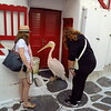 Petros the Pelican, official  mascot of Mykonos