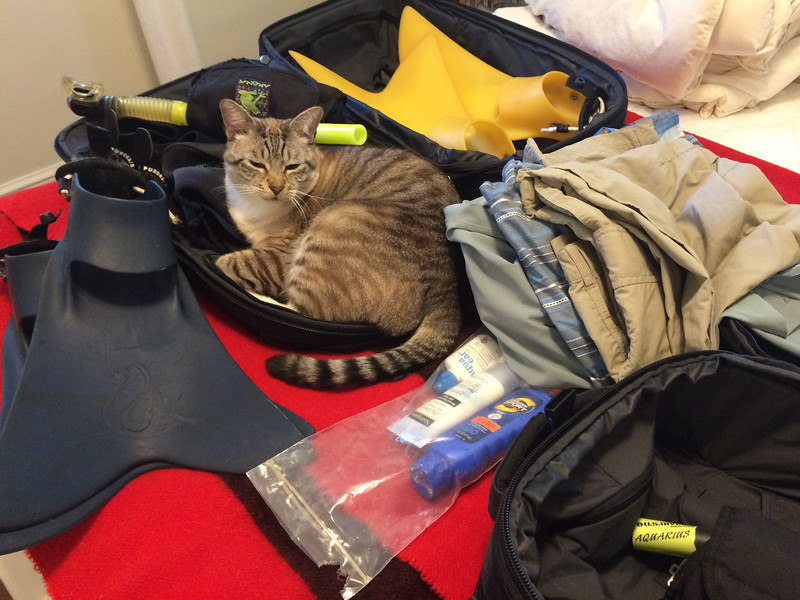 Sushi hoping to go too!