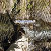 Looking down from the swingbridge at Wainui Falls