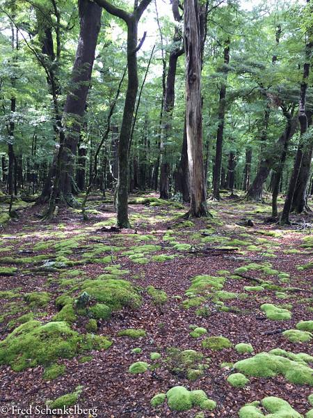 Forest walk of Lake Sylvan Loop Track