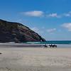 Horses at Wharariki Beach