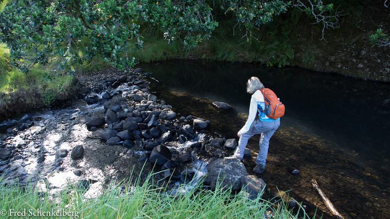 Stream crossing, Wairakau Stream Track