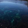 Clear waters of Pupu Springs