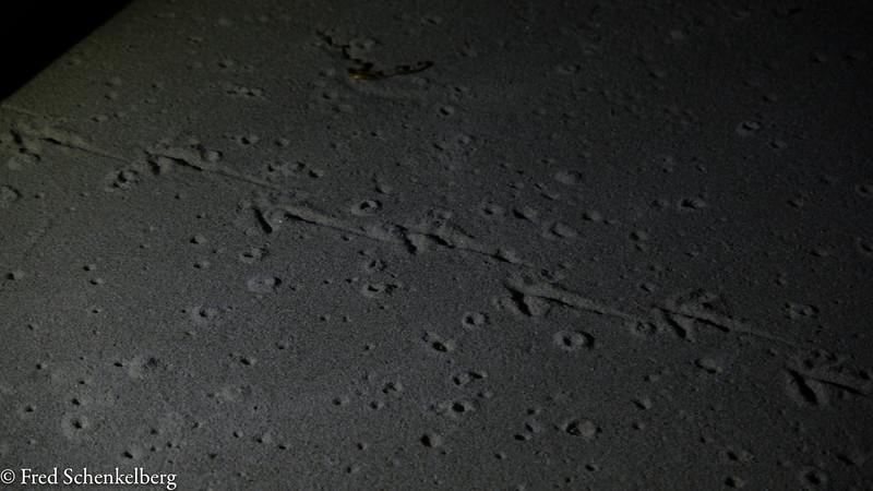 Kiwi tracks