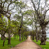 Groot Constantia grounds