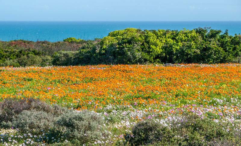 West Coast National Park
