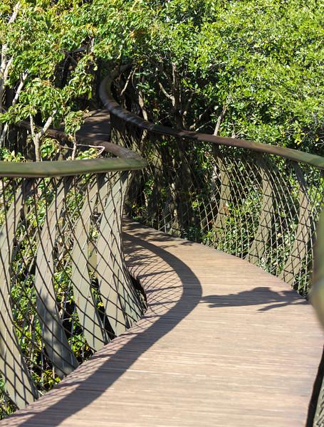 Tree Canopy Walkway @ Kirstenbosch National Botanical Gardens