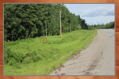 This was our first Black Bear sighting on the Yellowhead Highway.