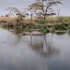 Hippo Pond