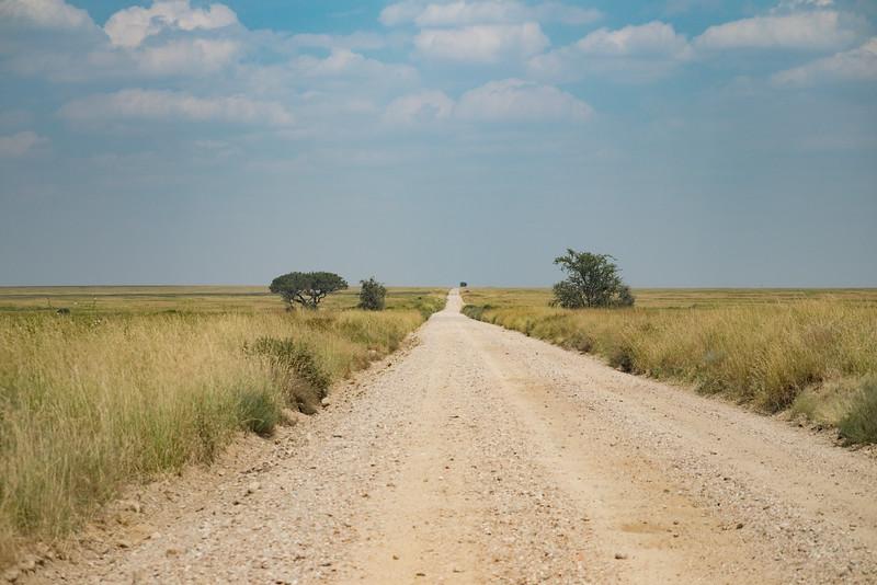 Safari road