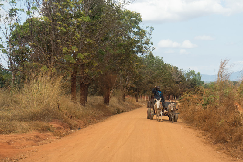 Mule drawn wagons are still often used